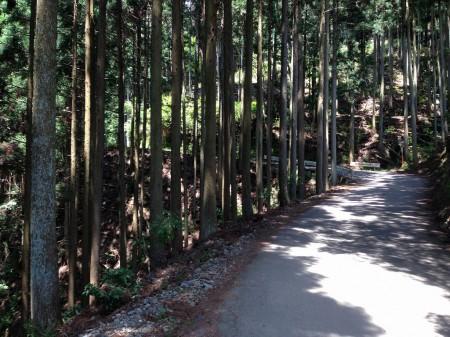 保津峡・水尾あたりの林道