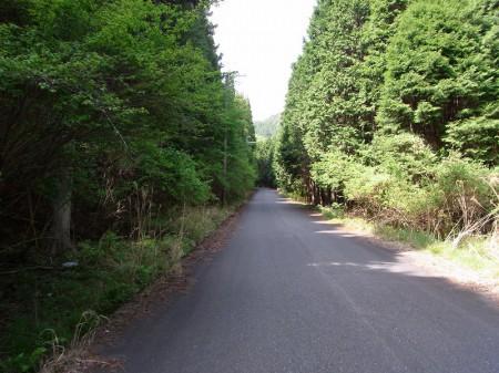 道は徐々に林道に