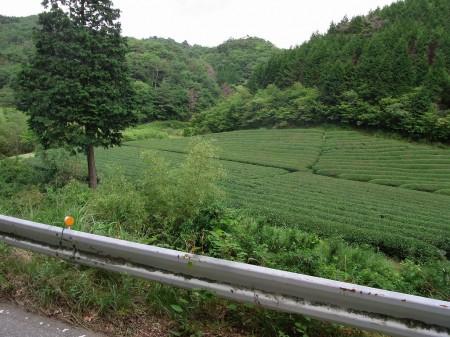 母子の茶畑