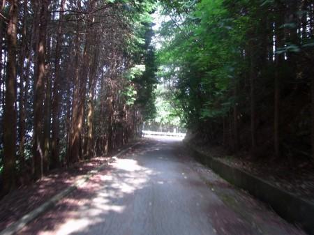 止々呂美林道へ