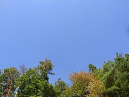 とても天気が良い