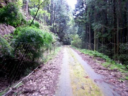 山の中を走る曾地奥林道