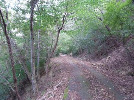 雰囲気がよい林道でした