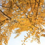 [紅葉ライド未遂] 紅葉を見に近所をポタリング!(大阪市内自転車散歩)