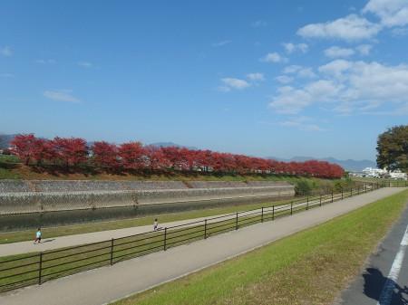 川沿いも秋