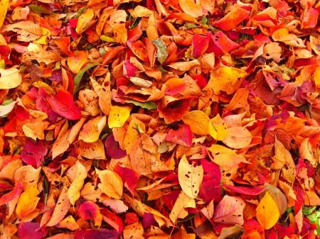 秋を感じた一日