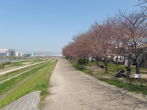 伊丹のあたり。桜はまだまだ。