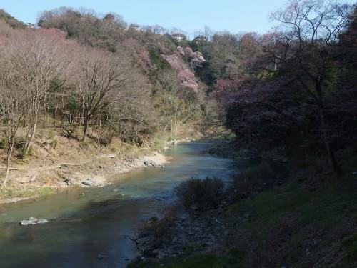山桜がほんのりと
