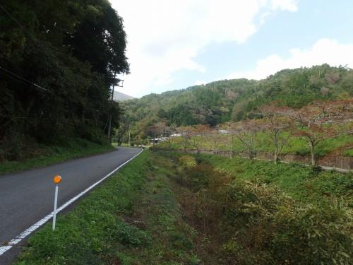 道は山のほうへ