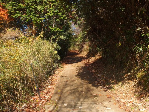狭い林道を行く