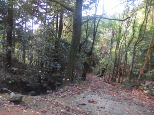 物静かな林道