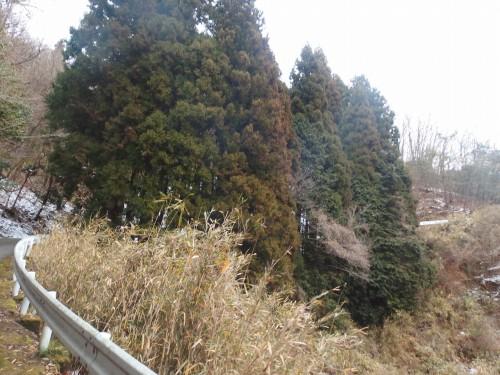 木々の中を抜ける