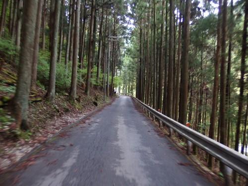 国道な林道を走る