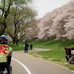 【ポタリング】石清水八幡宮と絶品ベーカリーを経て走る桜満喫ライド!
