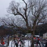 凍結を避けて走ろう!冬の北摂でカフェとうどんを巡る極寒「ツール・ド・イナガワ」ライド!