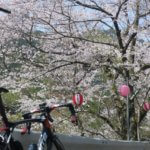 """春の和歌山で桜と海を満喫する!すさみから""""本州最南端""""の潮岬を走る遠征ライドへ!"""