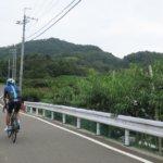 桃の季節がやってきた!和歌山・紀の川~紀美野町を走る充実の「桃ライド」を走る!!