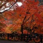 奈良へ紅葉狩りライド!紅葉の名所「正暦寺」を通ってウネウネ・アッペンダウンライドへ!!