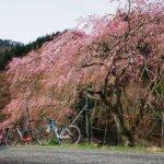 嵐山経由で美山までグルっと走る!春を感じる駆け足ロングライドへ!!