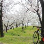 満開の桜を見に行こう!市内を徘徊するお散歩ライドへ!!