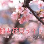 【京都お花見ライド】満開のしだれ梅と河津桜、そして絶品ハンバーグを味わう!!