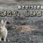 【ウサギだらけの大久野島へ】日帰りで「しまなみ海道」に行ってきました!