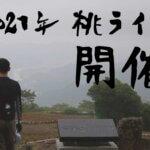 夏の桃ライド開催!和歌山・有田をスタートして「山越えをして桃を買う」屈折ライド!!